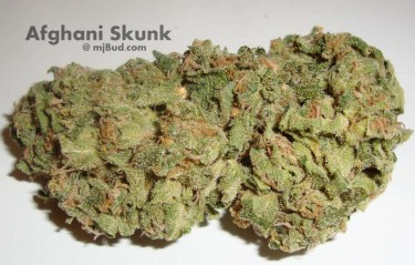Сканк сорт марихуаны конопля плюшки