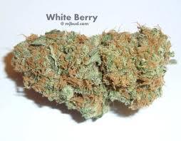 WHITE BERRY
