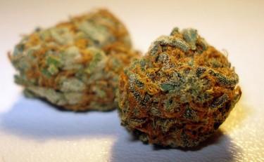 California Orange Bud