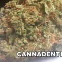 Cannadential