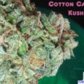 Cotton Candy Kush