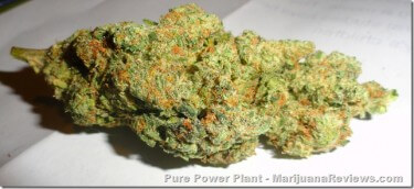 Pure Power Plant