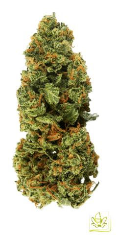 Сорт марихуаны Auto Jamaica Fem
